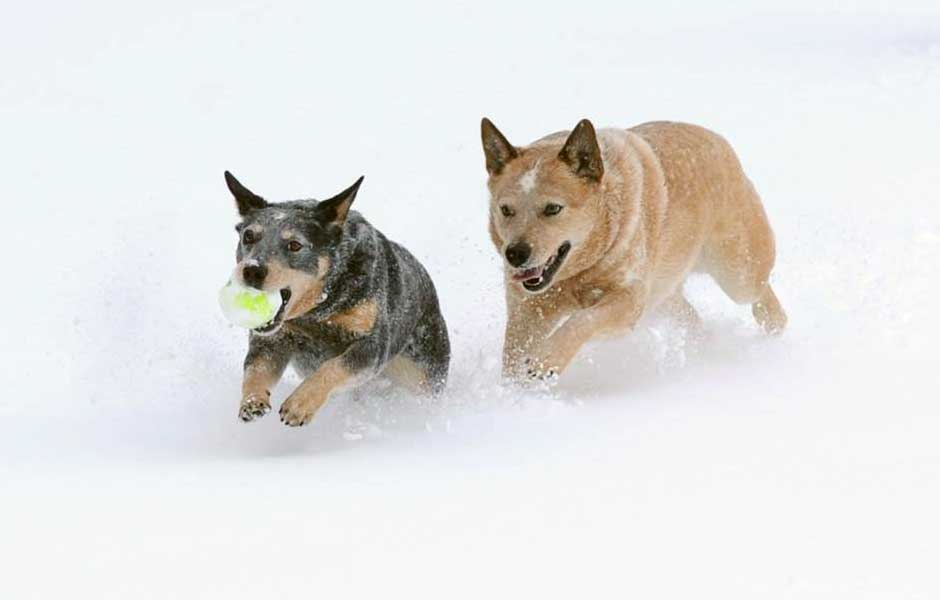 Two ACD's running through the snow for slider.