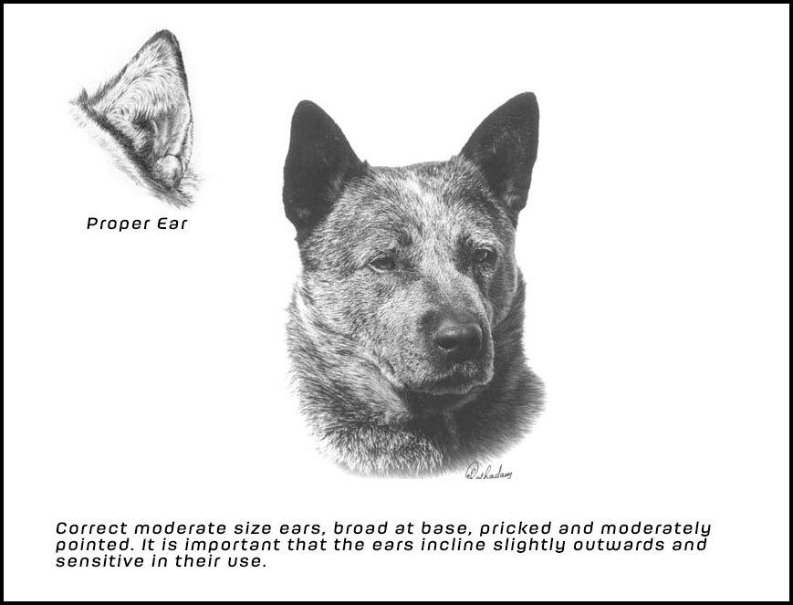 Proper Ear