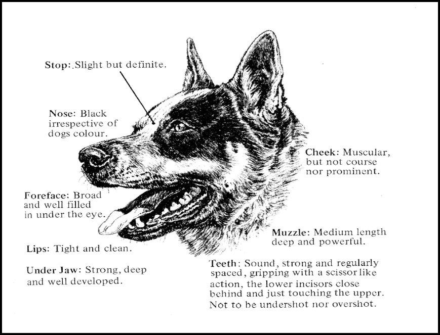 Correct head illustration.