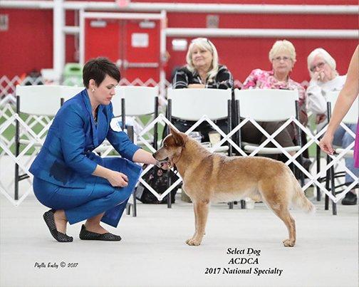 2017 Select Dog