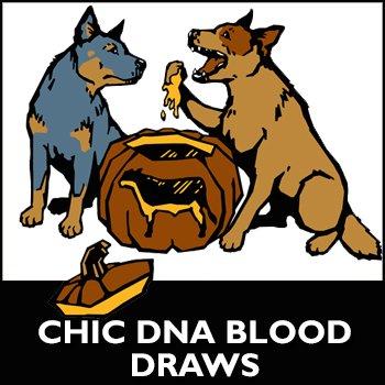 2021 CHIC DNA